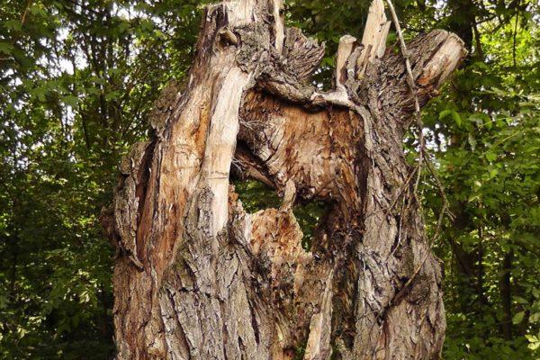 Priča o zmajevom stablu
