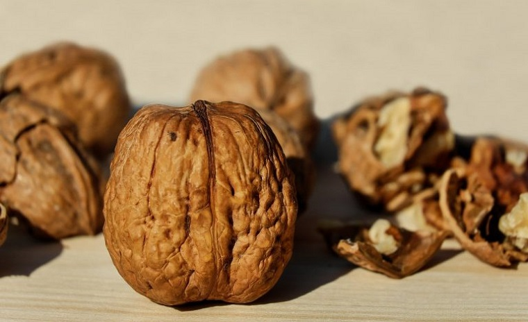 Podizanje plantaže oraha – Šta je važno znati, prvi koraci i priprema